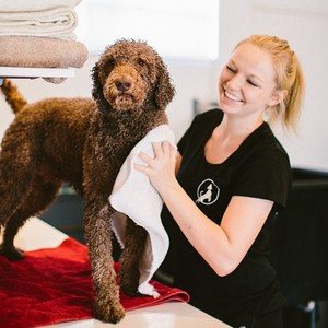 happy-paws-fitness-rushcutters-bay-pet-care-62f3-300x0